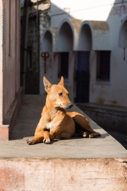 AvdBrink_India2017_Dog
